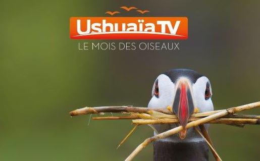 http://www.universfreebox.com/UserFiles/image/moisoiseaux.png