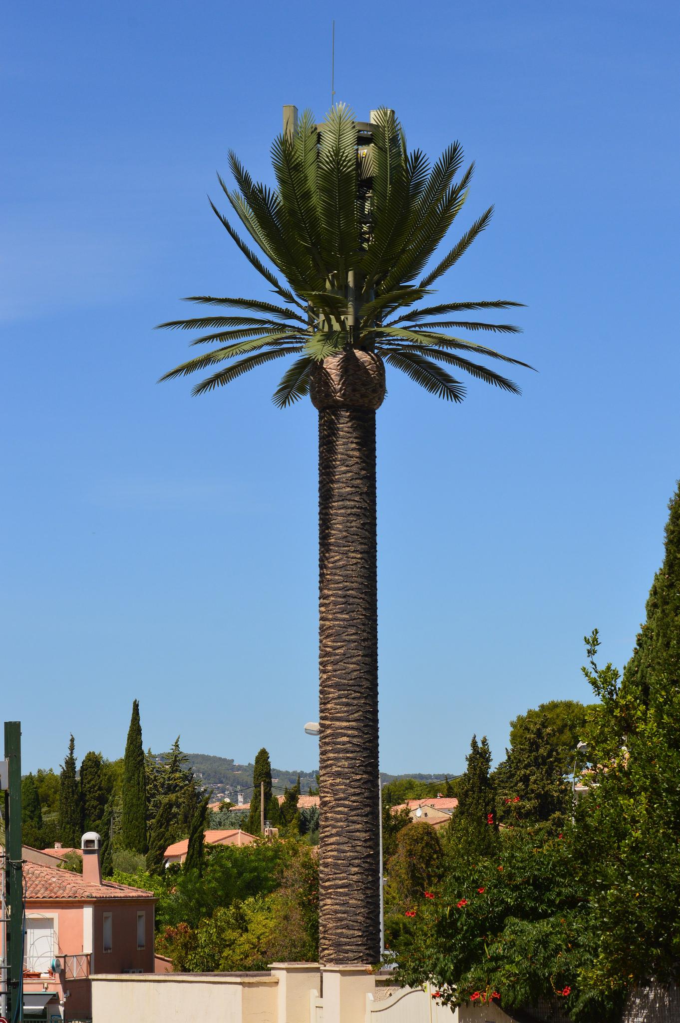 Free mobile reportage photos antenne de type palmier royal - Type de palmier ...