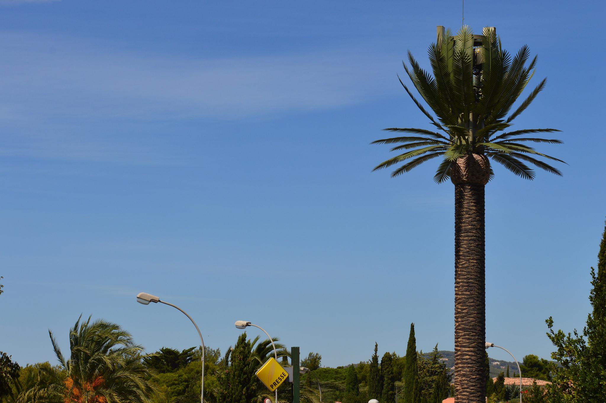 Free mobile reportage photos antenne de type palmier royal - Quand tailler un palmier ...