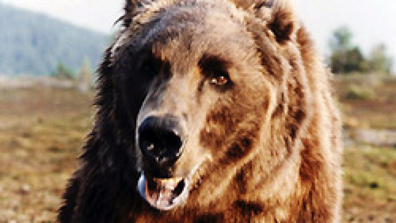 [Film] L'ours