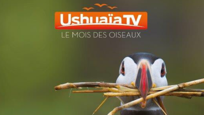 Ushuaïa TV offerte sur Freebox TV : c'est parti