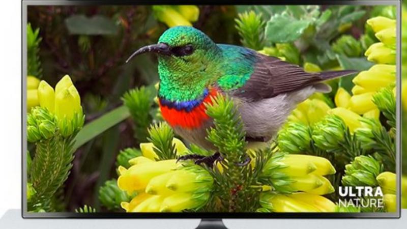 [MàJ] Free annonce l'arrivée d'une nouvelle chaîne 4K sur la Freebox Mini 4K