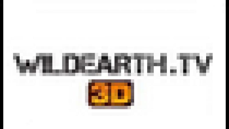 110 – Wildearth 3D