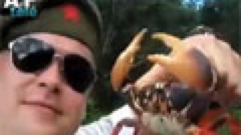 Zapping : Un sauvetage de veau, une attaque de crabes …