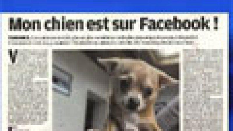 Zapping : Des chiens sur facebook…