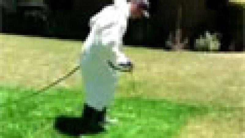 Zapping : Repeindre sa pelouse plutôt que de l'arroser …