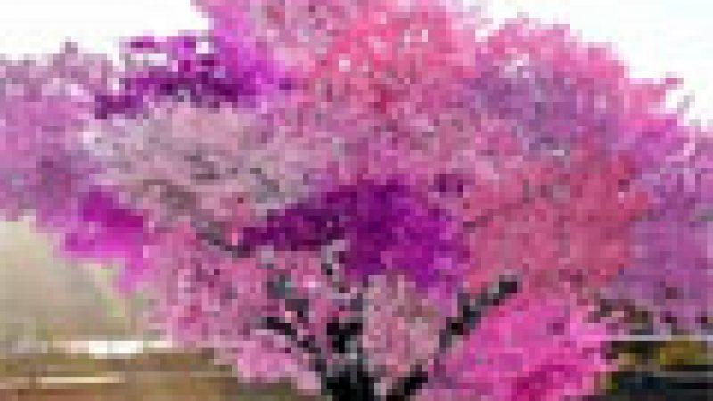Zapping : L'arbre magique…