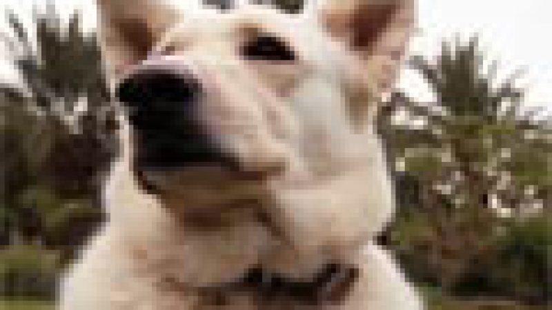Zapping : découvrez DOG TV, qui vient d'arriver en France chez Orange…