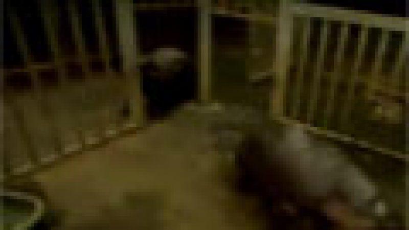 Zapping : violence chez les hippopotames et dans la télé-réalité…