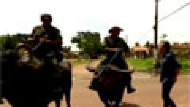 Zapping : la police montée sur des buffles…