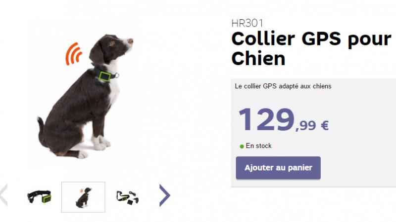 """SFR lance le collier GPS pour chien """"connecté"""""""