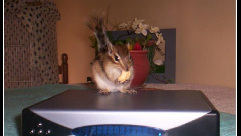 Clin d'oeil : Même les animaux adorent la Freebox