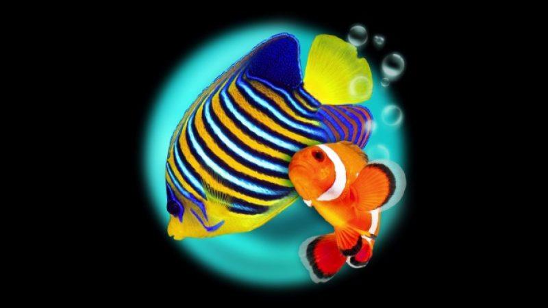 Transformez votre TV en aquarium virtuel 3D interactif avec la Freebox Mini 4K