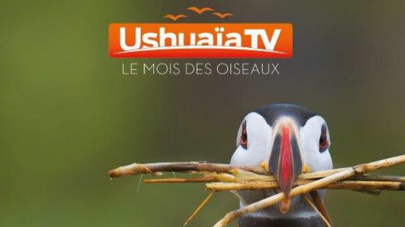 Ushuaïa TV offerte sur Freebox TV : ce sera durant la totalité du mois d'avril