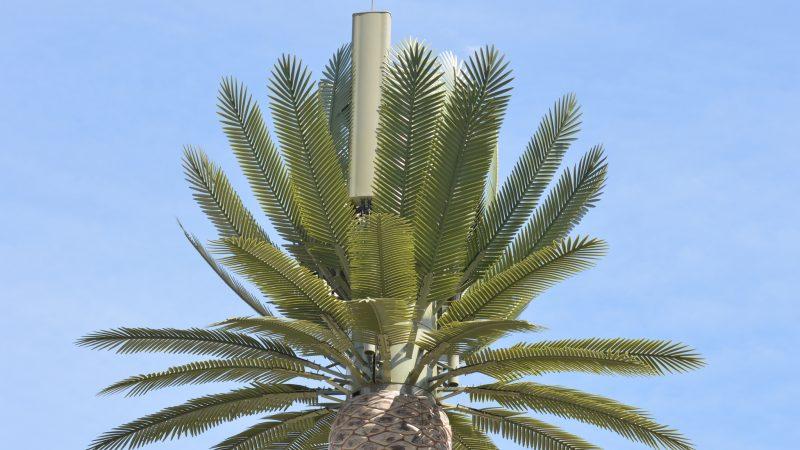 Free Mobile propose une antenne-relais de type palmier ou pin, le maire la veut invisible