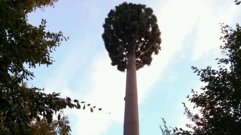 Une antenne Free Mobile cachée dans un pylone-arbre