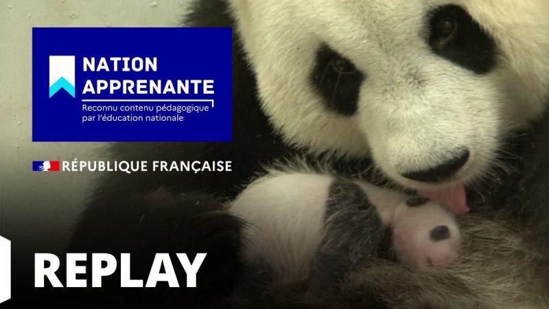 """Confinement : le groupe TF1 prend part à l'opération """"Nation Apprenante"""" et proposera des documentaires sur Ushuaïa TV et Histoire TV"""