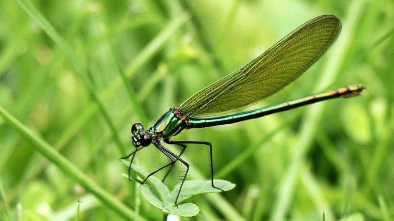 Réseaux sans-fil et smartphones, une menace sérieuse pour les insectes, alerte une association