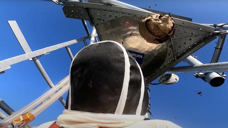 Un technicien télécoms se fait piquer 14 fois par des frelons asiatiques à 27 mètres de hauteur sur une antenne