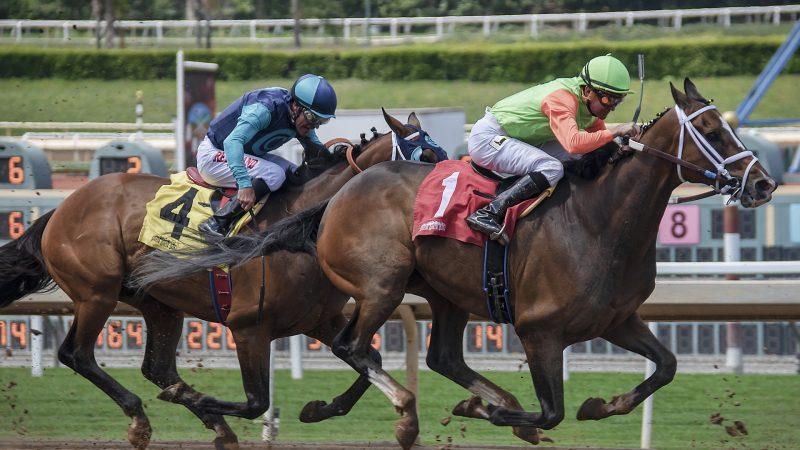 Clin d'oeil : un cheval fait la course avec une connexion internet… et gagne